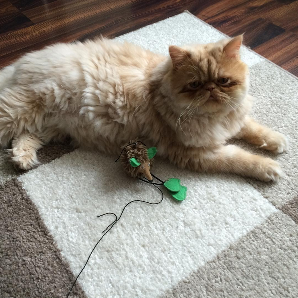 Persian Cat Toy