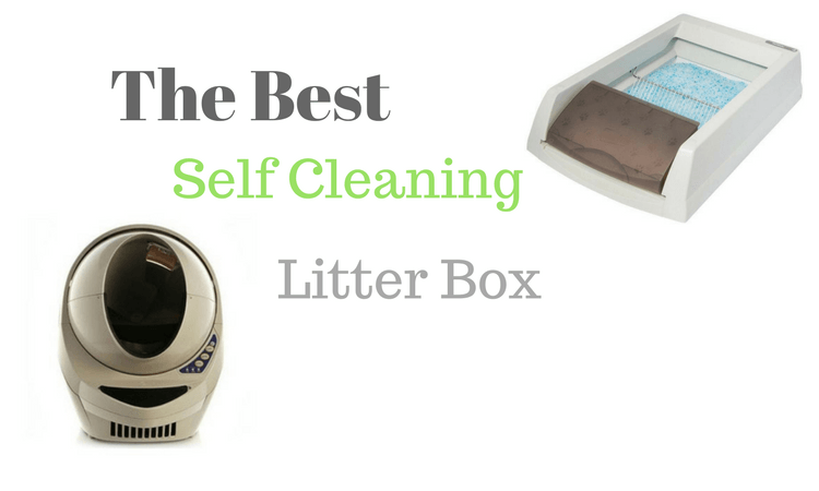 Self Cleaning Litter Box Reviews