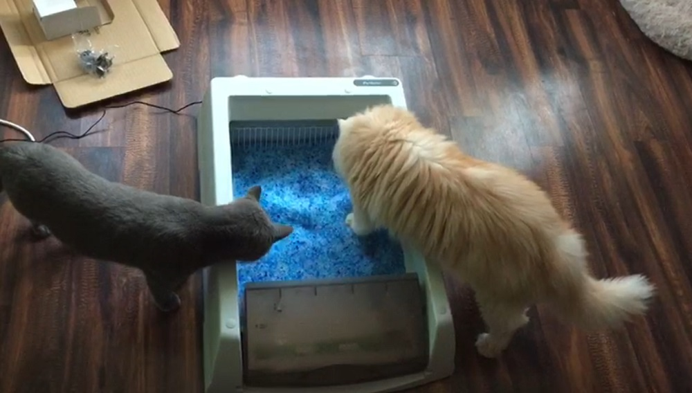 Scoopfree Self Cleaning Litter Box Milo and Teddy