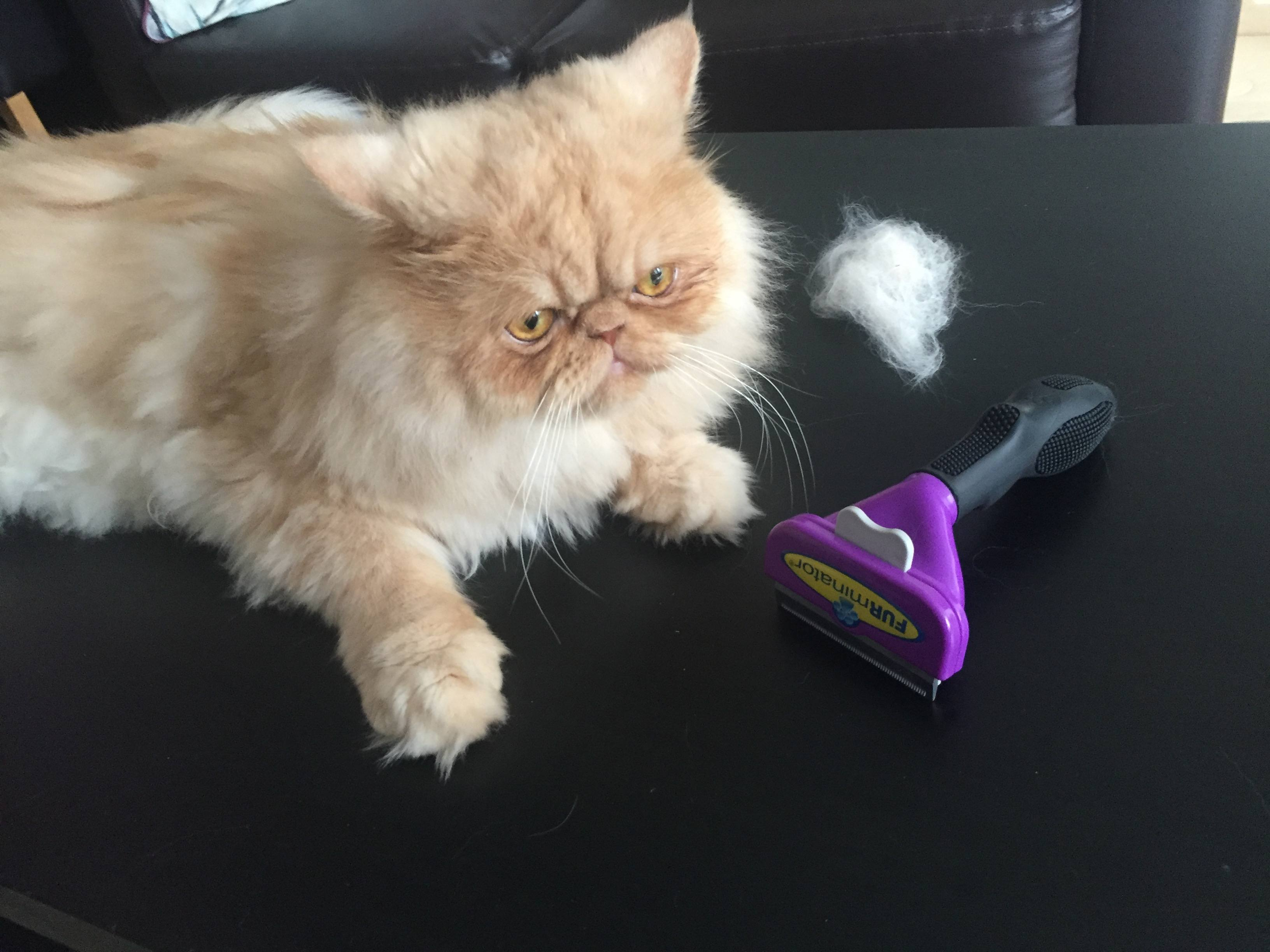FURminator Review