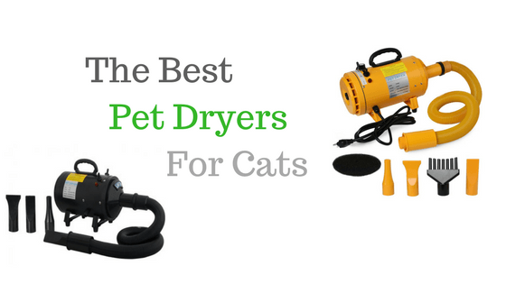 Best Pet dryers for Cats