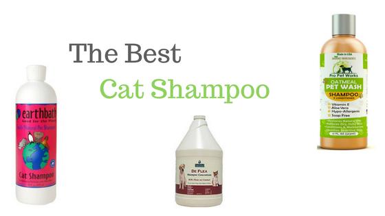 Cat Shampoo Reviews