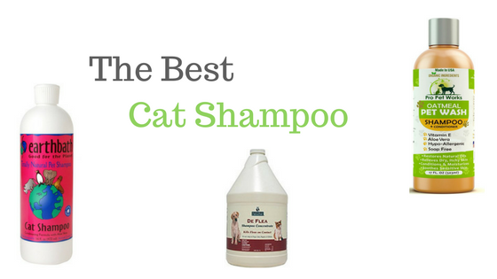 Cat Shampoo Reviews