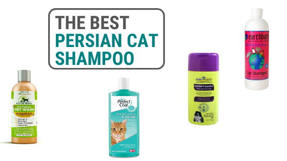 Best Persian Cat Shampoo