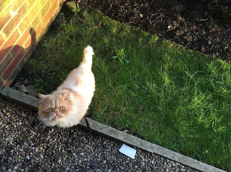 Milo Persian Outside