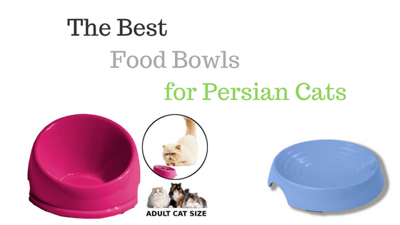 Persian cat food bowls
