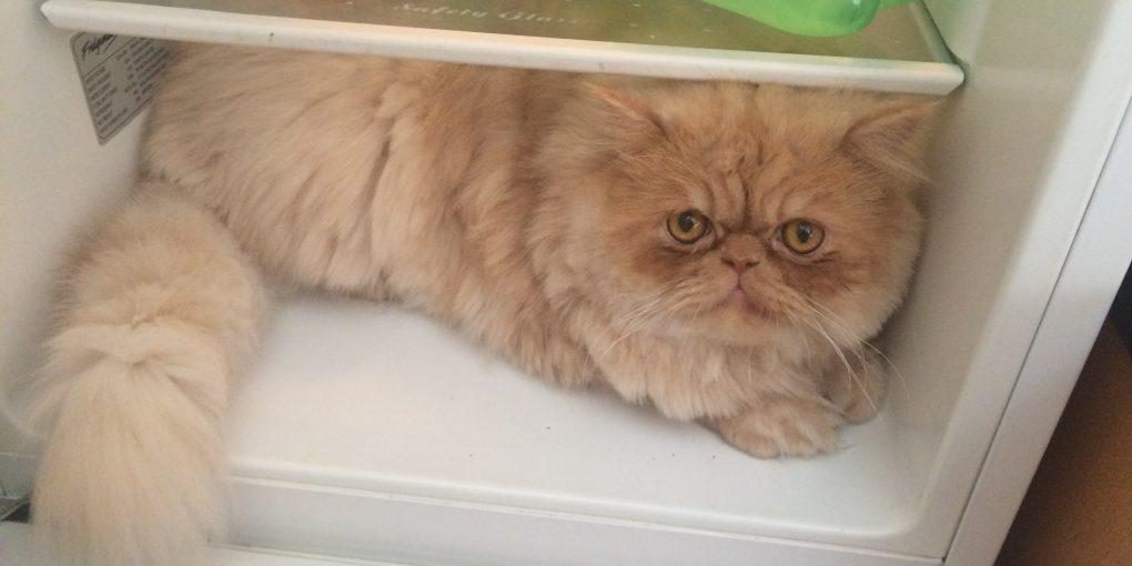 Milo in the fridge
