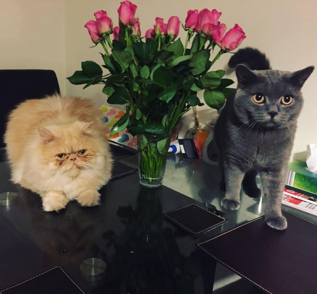 Milo and Teddy