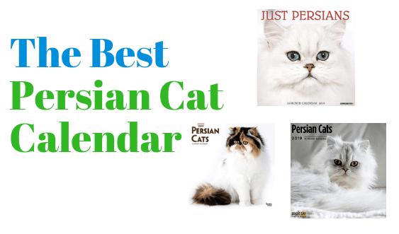 Best Persian Cat Calendar