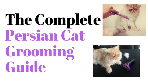 Persian cat grooming guide