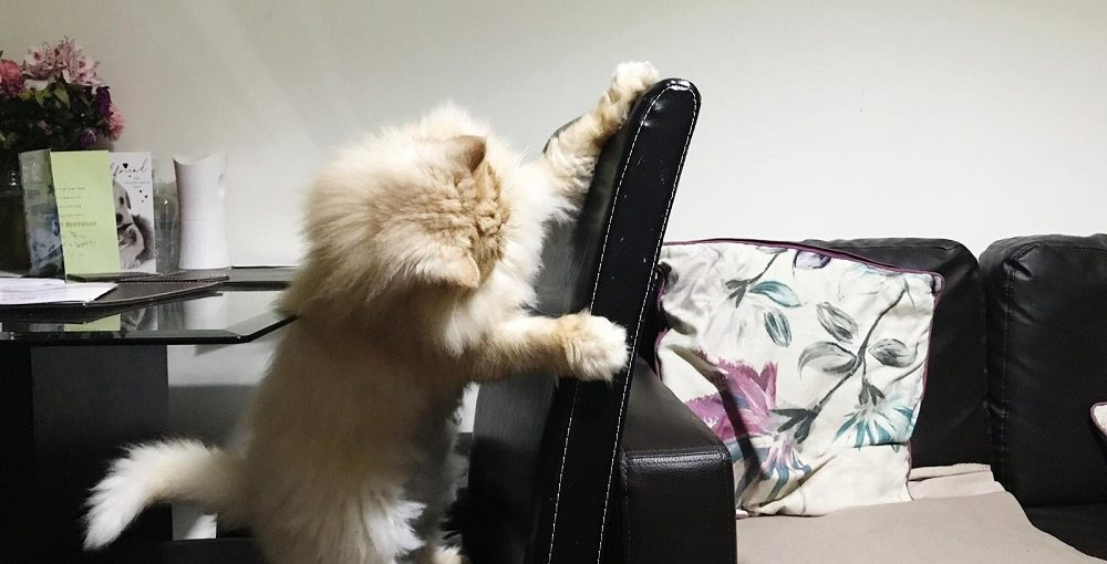 Milo scratching