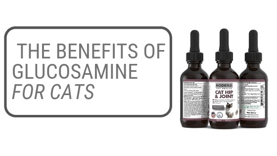 Glucosamine for cats