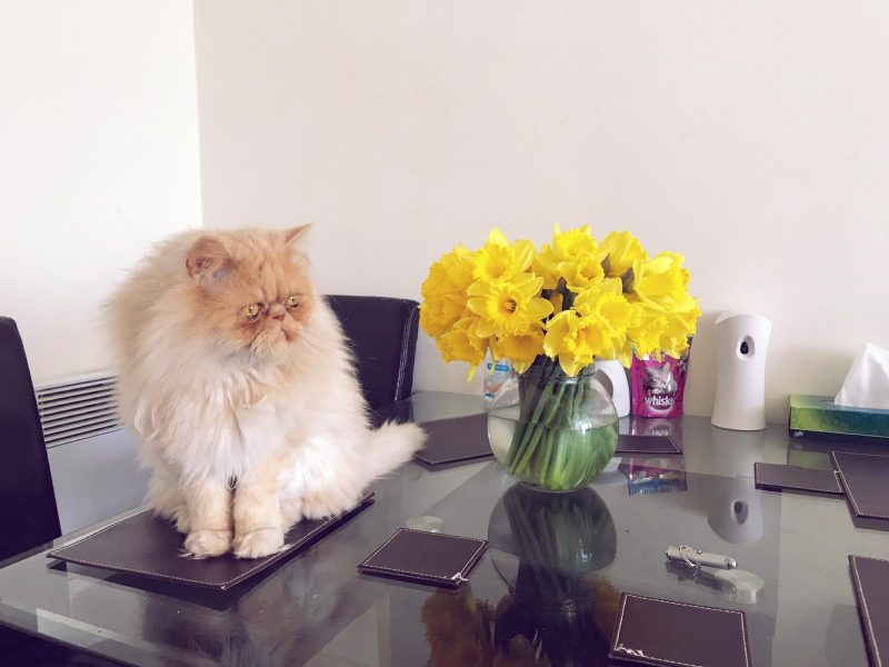 milo with daffodils