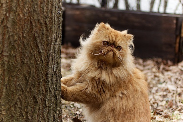 persian cat and tree