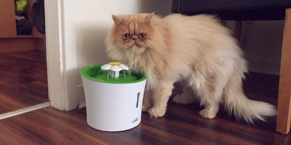 Milo Drinking from Catit Design Fountain