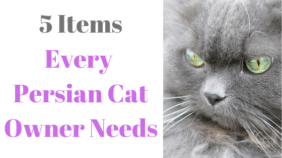 5 must have persian cat items