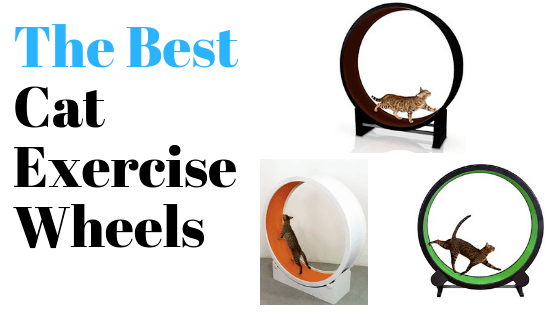 best cat exercise wheels