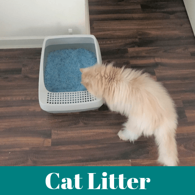 Persian Cat Litter