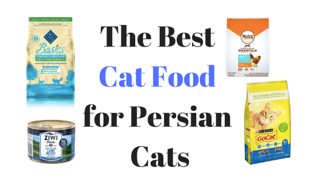 Best Cat Food for Persian Cats: The Ultimate Guide