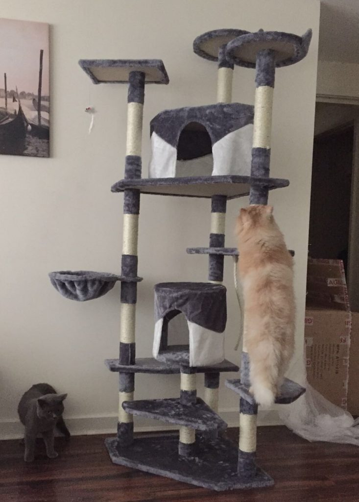Persian-on-cat-tree