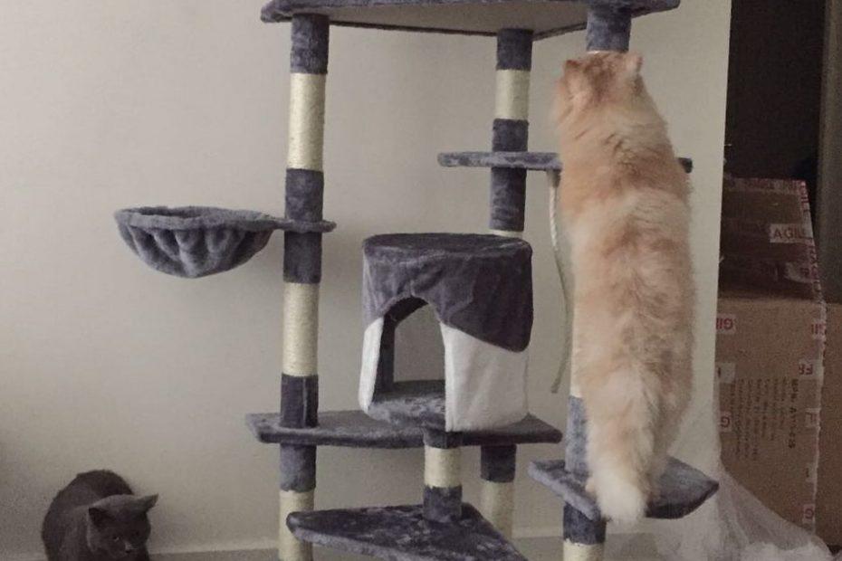 Persian-on-cat-tree