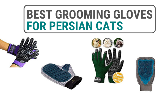 Persian cat grooming gloves
