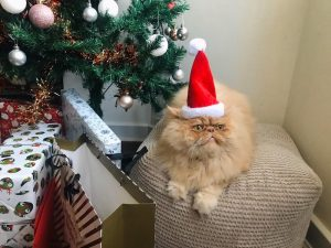 Milo at Christmas