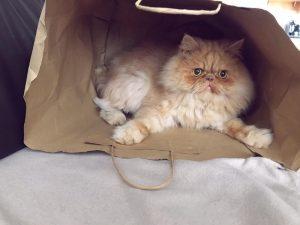 Milo in a bag