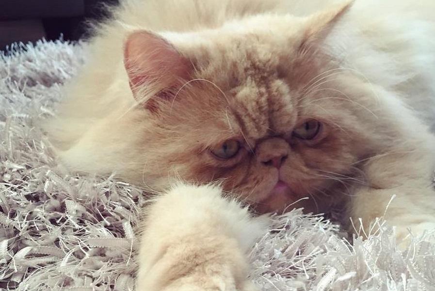 Milo laying