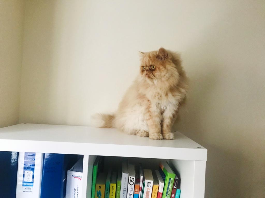 Milo on the bookshelf