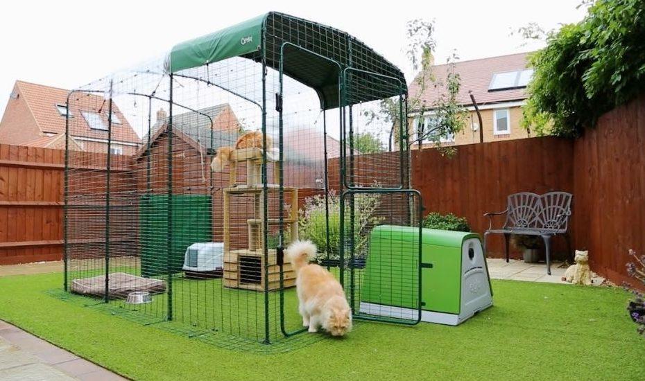 cats in catio enclosure